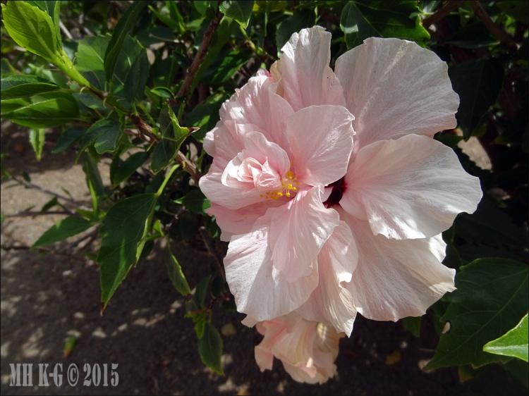 gran canaria bloemen 3 wp